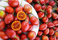 Cà chua 500.000 đồng một cây giống, 50.000 đồng một hạt giống vẫn đua nhau mua về trồng