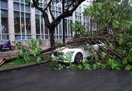 Hàng loạt cây xanh đổ gãy đè ôtô, nhà dân trong mưa lớn ở Sài Gòn