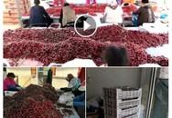 Cherry Trung Quốc giá 120.000 đồng một kg tràn ngập chợ mạng