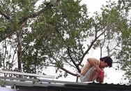 Dựng lại nhà sau khi dỡ gần hết mái, vách để tránh bão Tembin