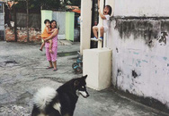 """Cô bé la khóc, trèo lên cột vì sợ chó: Khoảnh khắc """"gây bão"""" mạng xã hội Việt"""