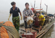 Nhọc nhằn nghề vớt sứa biển