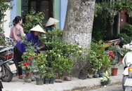 Lộn xộn chợ hoa, cây cảnh trên phố Hoàng Hoa Thám