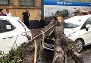 Hà Nội: Mưa lớn đầu mùa, cây đổ đè người và xe