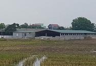 Tiên Lữ (Hưng Yên): Đất nông nghiệp bị chiếm dụng tràn lan