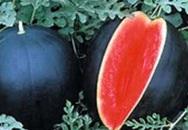 Lý do khiến loại dưa hấu này có giá lên tới 130 triệu đồng/1 quả