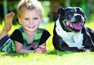 Sủa điên cuồng để thu hút sự chú ý, chó cưng lập công khi giúp chủ cứu sống con trai trong gang tấc