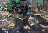 Kiến An, Hải Phòng: Khách sợ ăn cỗ vì ruồi quá nhiều!