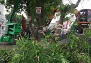 Hà Nội di chuyển, chặt hạ cây xanh trên đường vành đai 3