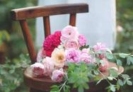 Say đắm trước vườn hồng rộng đến 350m² ở xứ Huế mộng mơ