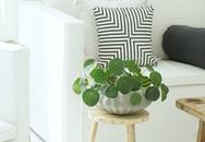 10 loài cây cảnh vô cùng nhỏ nhắn và xinh xắn để đưa vào trồng trong nhà
