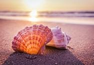 Nhặt được vỏ sò trên biển, cả gia đình tròn mắt ngạc nhiên khi lật mặt dưới lên