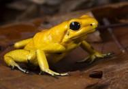Nhìn thấy loài vật xinh đẹp này, đừng dại động vào vì nó có thể giết chết chục người trong chốc lát