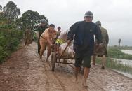 Thanh Hóa: Hơn 100 nhà dân bị ngập nước do vỡ đê