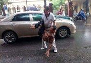 Sự thật tài xế ô tô đâm ngã cụ già 70 tuổi ở Hải Phòng rồi bỏ lại ven đường