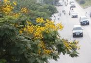 Đường phố Hà Nội đẹp rực rỡ sắc màu của các loài hoa mùa hạ
