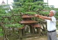 Siêu phẩm cây sanh cổ: Hiếm có khó tìm, giá đỉnh 120 tỷ