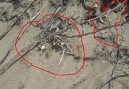 Phát hiện bộ xương dưới hầm cầu ở nhà nghi phạm giết vợ