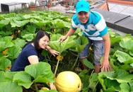 Thiên đường rau quả trên nóc nhà của anh đầu bếp Việt ở Đức