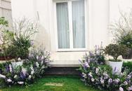 Biệt thự trắng được nữ chủ nhân tô điểm bằng hàng ngàn cành violet