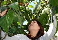 Cà chua Tamarillo 1 triệu đồng/1kg vẫn đắt khách