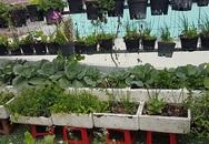 Gia đình Sài Gòn đủ rau ăn với mảnh vườn 4m2 trên mái