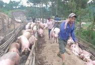 """Trung Quốc mua gom thịt lợn: """"Không cẩn thận, lại phải giải cứu"""""""