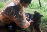 Tình đồng đội đặc biệt giữa chiến sĩ cảnh sát và chú chó nghiệp vụ trên hành trình cứu hộ sau sạt lở kinh hoàng ở Hòa Bình