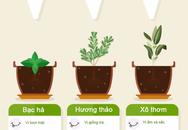 Hướng dẫn xây dựng khu vườn thảo mộc nhỏ xinh cho gia đình