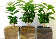 5 loại cây hút ẩm nên trồng trong nhà khi sang xuân