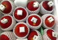 """""""Săn"""" táo Nhật khổng lồ mỗi quả nặng 1 kg biếu Tết"""