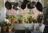 Cảnh báo: Giật mình những dụng cụ nhà bếp chứa độc tố chết người