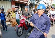 Rọ mõm chó cháy hàng trên chợ mạng