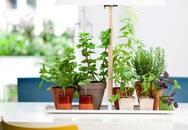 15 thiết kế chậu trồng cây gia vị thông minh và hiện đại cho nhà nhỏ