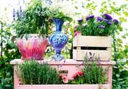 20 cách tạo luống hoa đẹp như chốn mê cung cho khu vườn