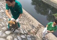Hà Nội: Chú chó mắc bệnh care khó chữa bị chủ thẳng tay ném xuống sông Tô Lịch