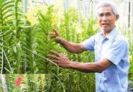 Cụ ông 62 tuổi làm giàu bằng cách trồng lan trên… đá