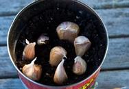Cách trồng tỏi tại nhà cho củ to tròn, ăn cả năm chả hết