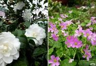 Nhà vườn đẹp như cổ tích rộng 3ha của cặp vợ chồng Hà thành