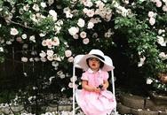 Khu vườn rực rỡ có hàng rào hoa hồng đẹp như cổ tích lại tràn ngập rau trái của mẹ Việt ở Mỹ