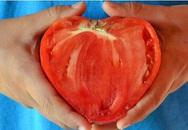 Trồng cà chua hình trái tim để... tình yêu thăng hoa