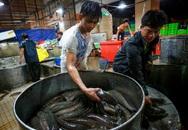 Sài Gòn: Chợ cá lóc ùn tắc trong ngày vía Thần tài