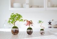 Aqua bonsai – giải pháp mang nghệ thuật xanh tinh tế cho nhà nhỏ