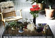Căn hộ cũ được 'nâng giá' khi bày trí những chậu cây nhỏ xinh