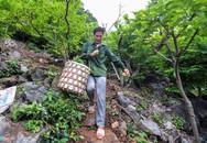 Gian nan nghề trồng na trên núi đá