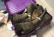 Phát hiện lô hàng nghi là sừng tê giác tại sân bay Nội Bài