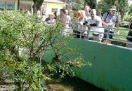 Bí ẩn 40 năm trong trại rắn độc lớn nhất cả nước