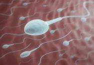 Tranh cãi tinh trùng sống được bao lâu ngoài cơ thể