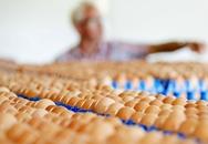 Trứng gà nhiễm thuốc trừ sâu: Vì sao và độc đến đâu?