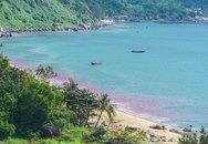 Vệt nước màu đỏ ở biển Đà Nẵng là trứng ruốc